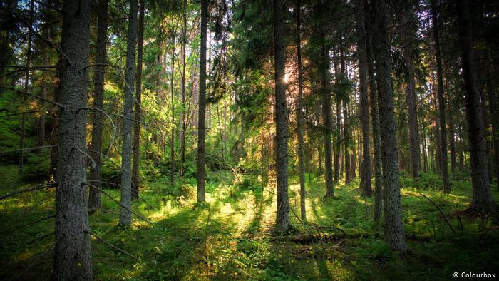 Нормы заготовки древесины для своих нужд в Вологодской области в 2020 году